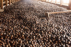Nutmeg Sorting Rack in Old Factory Royalty Free Stock Images