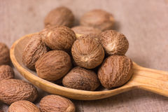 Nutmeg Royalty Free Stock Images