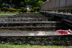Nutmeg strąki, Grenada Zdjęcia Royalty Free