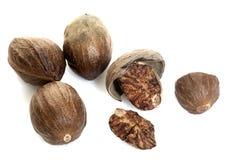 Nutmeg in studio Royalty Free Stock Image