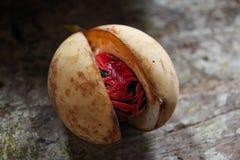 Nutmeg surowy przy wyspą Grenada obraz stock