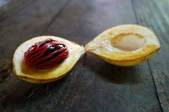 Nutmeg surowy przy wyspą Grenada zdjęcia stock
