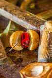 Nutmeg w Grenada, Karaiby Zdjęcie Royalty Free