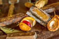 Nutmeg w Grenada, Karaiby Obrazy Stock