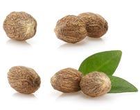 Nutmeg on white background Royalty Free Stock Photos