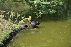 Nutria in the nature. As there live nutrias Stock Photo
