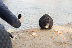 Nutria are removed on the phone Stock Photo
