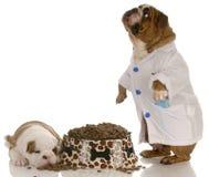 Nutrición animal fotografía de archivo