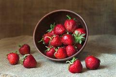 Nutrición sana orgánica fresca de las fresas Imagen de archivo libre de regalías