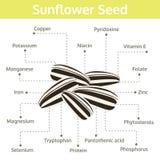 Nutriente da semente de girassol dos fatos e dos benefícios de saúde Fotografia de Stock