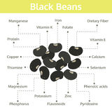 Nutriente dos feijões pretos dos fatos e dos benefícios de saúde, gráfico da informação Fotos de Stock