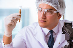 The nutrition expert testing food products in lab Royalty Free Stock Images