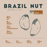 Nutrition fact of Brazil nut. Hand drawn vector illustration stock illustration