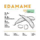 Nutrition facts of edamame, Hand draw vector stock illustration