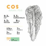 Nutrition facts of raw cos. Hand draw sketch vector royalty free illustration