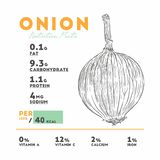 Nutrition facts of raw onion. Hand draw sketch vector royalty free illustration