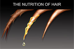 Nutrition and strengthening the hair Stock Image