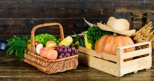 The nutritional choice. rich autumn crop. seasonal vitamin. organic and natural food. halloween. shopping in supermarket stock image
