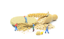 Nutritional food oat cakes Stock Image