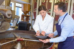 Nutritionist checking coffee beans. Nutritionist checking the coffee beans Royalty Free Stock Photo