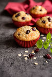 Nutritious oatmeal muffins with cranberries Royalty Free Stock Photo