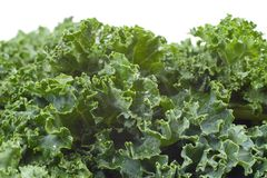 Nutritious Wet Kale. Bunch of fresh wet kale greens Royalty Free Stock Images