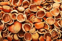 nuts древесина раковины Стоковое фото RF