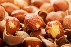 nuts древесина раковины Стоковые Изображения