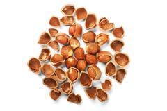 nuts раковина Стоковые Изображения