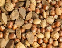 nuts раковины выбора Стоковые Изображения RF
