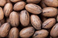nuts раковины пекана Стоковые Фотографии RF