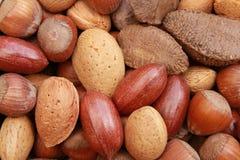 nuts раковины Стоковые Фото