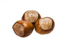 nuts раковины Стоковое Фото