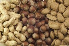 nuts рядки Стоковая Фотография RF