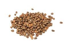 nuts сосенка кучи Стоковые Фото
