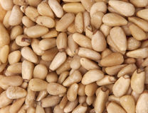 nuts сосенка Стоковые Фото
