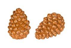 nuts сосенка Стоковое Изображение