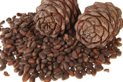nuts сосенка Стоковая Фотография RF
