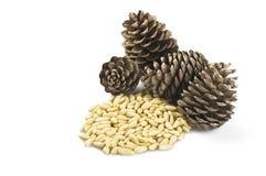 nuts сосенка Стоковые Фотографии RF