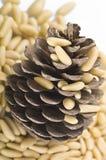 nuts сосенка Стоковая Фотография