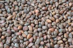nuts сосенка Стоковое фото RF