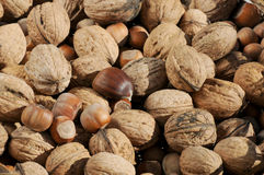 Nuts. General nuts collected and gathered together royalty free stock photography