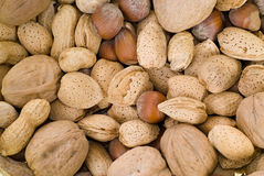 Nuts. Background of mixed nuts including walnuts, hazelnuts and peanuts Stock Photos