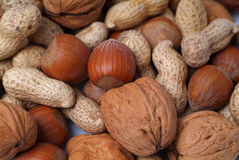 Nuts. Different nuts close-up, focus on hazelnut in the middle Royalty Free Stock Photos