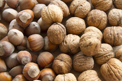 Nuts. Group of hazelnuts and walnuts as a background Royalty Free Stock Photo