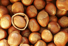 Nuts. A lot of hazel nuts Royalty Free Stock Photo