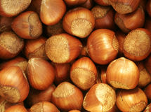 Nuts. A lot of hazel nuts Stock Photography