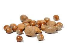 Nuts! Royalty Free Stock Photo