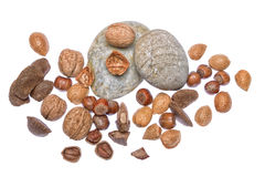 Nuts. Mixed nuts - Brazil nuts, almonds, walnuts, hazelnuts Stock Photos