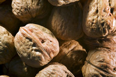Nuts. Set of nuts views closely Royalty Free Stock Photo